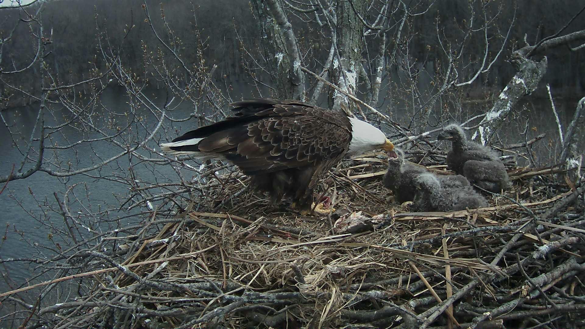 Feeding time April 4, 2016