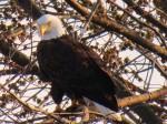 lost-mound-birding-tours